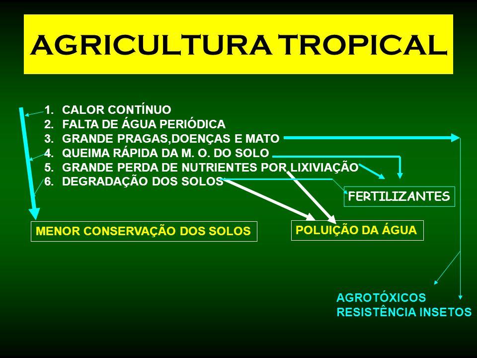 AGRICULTURA TROPICAL CALOR CONTÍNUO FALTA DE ÁGUA PERIÓDICA