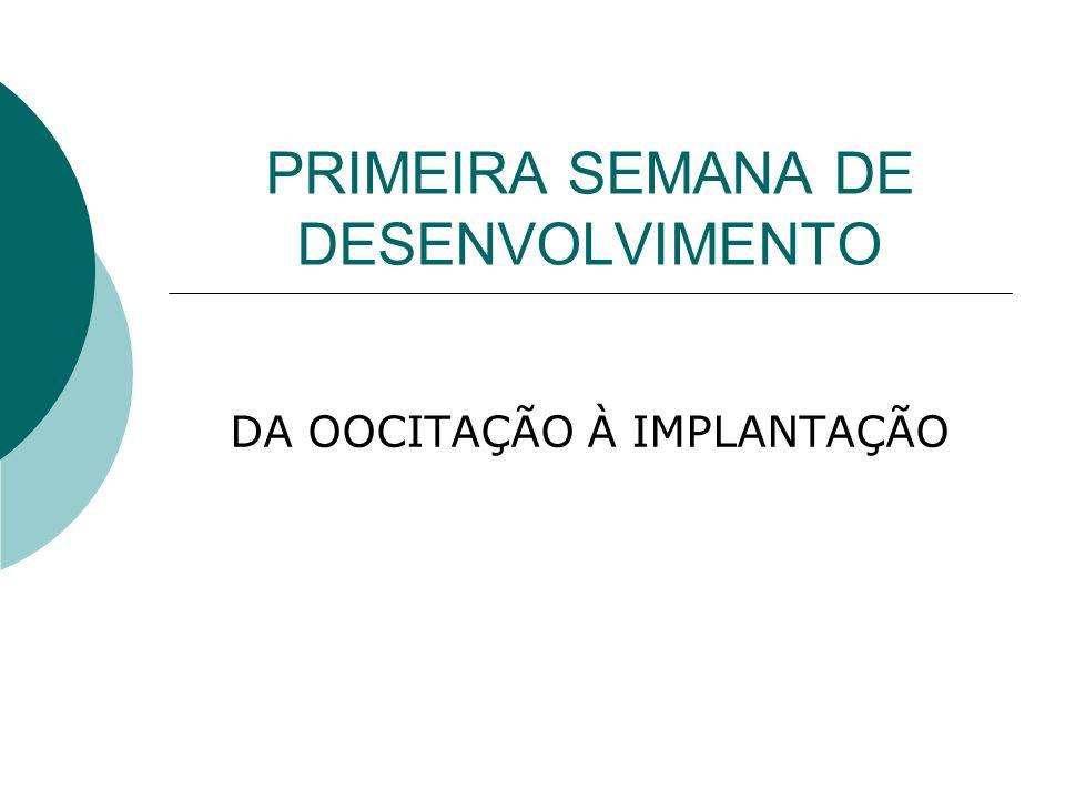 PRIMEIRA SEMANA DE DESENVOLVIMENTO