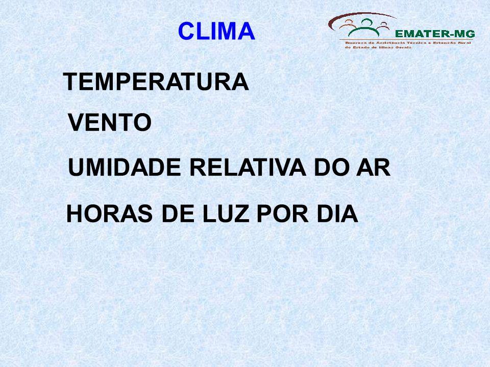 TEMPERATURA VENTO UMIDADE RELATIVA DO AR HORAS DE LUZ POR DIA CLIMA