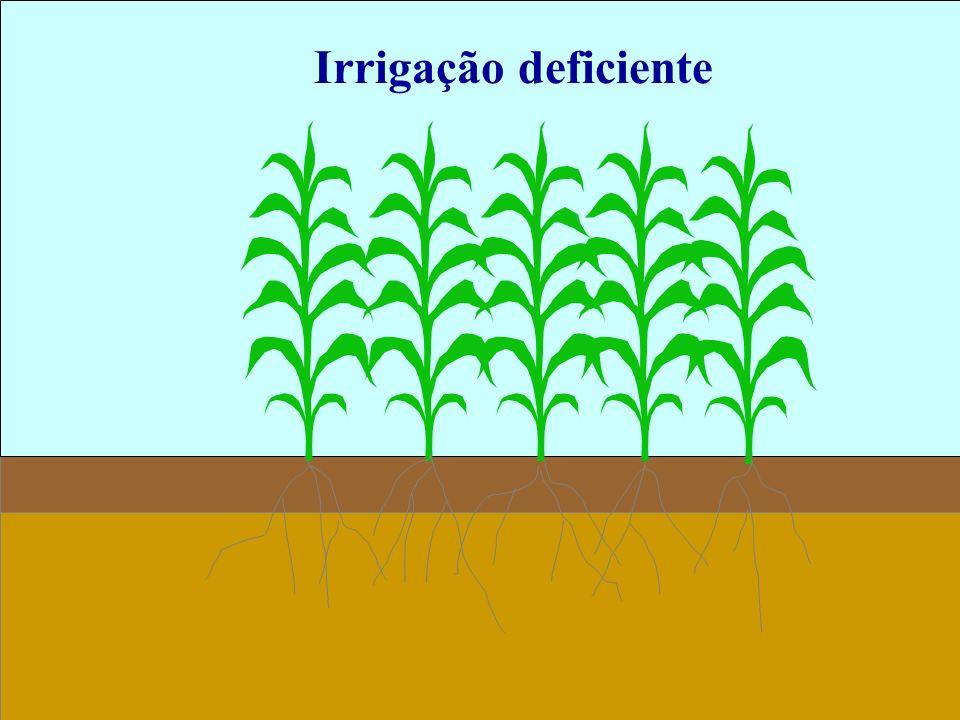 Irrigação deficiente 16