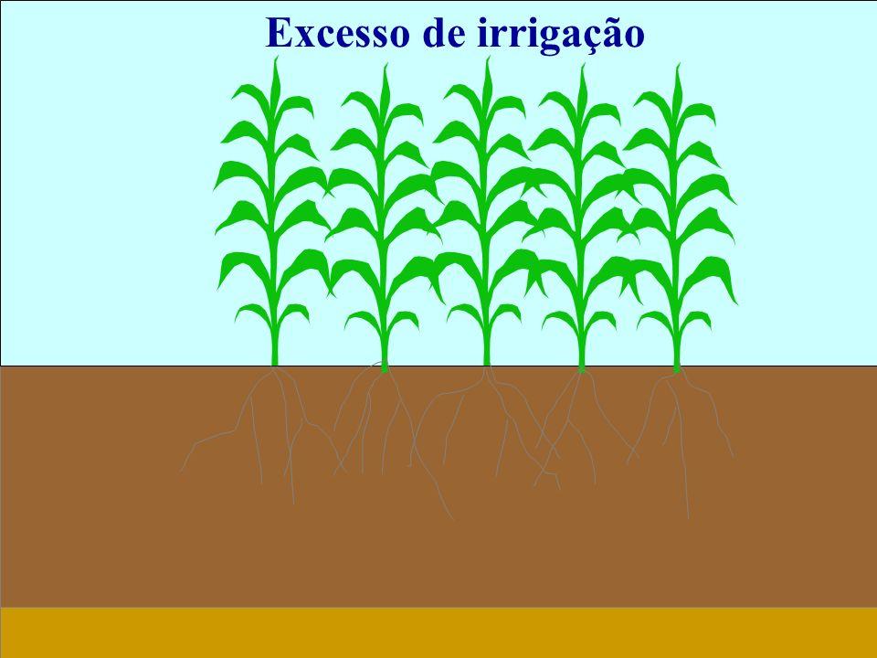 Excesso de irrigação 17