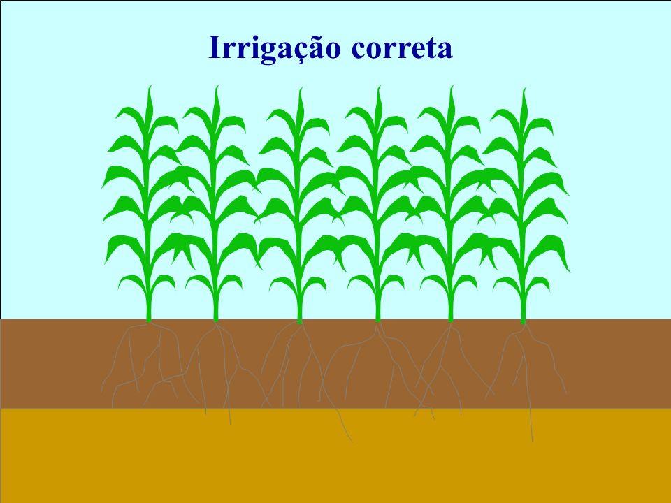 Irrigação correta 18