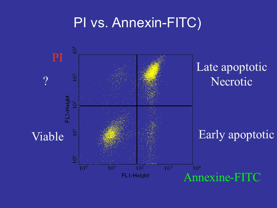 PI vs. Annexin-FITC) PI Late apoptotic Necrotic Early apoptotic