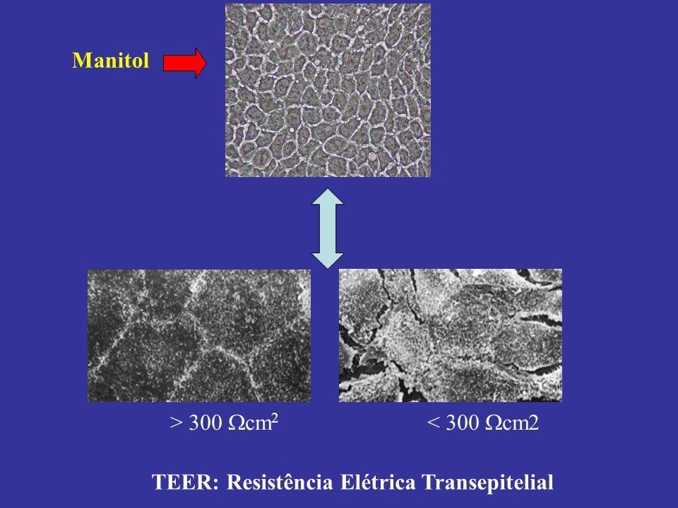 Manitol > 300 cm2 < 300 cm2 TEER: Resistência Elétrica Transepitelial