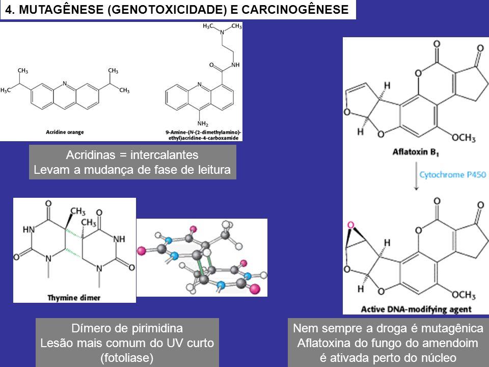 4. MUTAGÊNESE (GENOTOXICIDADE) E CARCINOGÊNESE