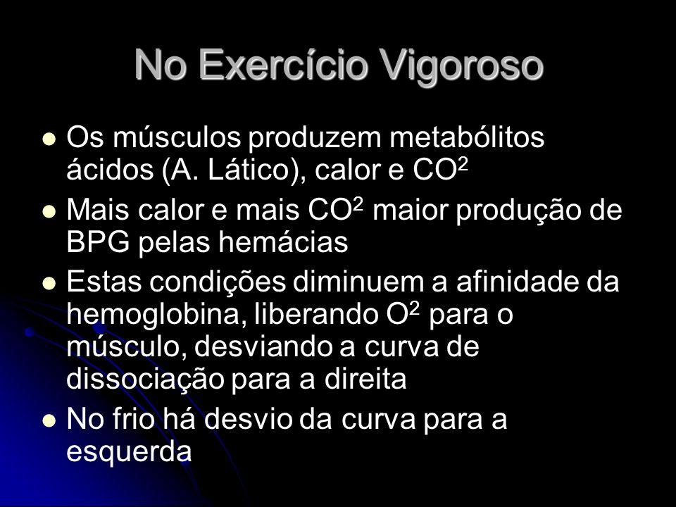 No Exercício Vigoroso Os músculos produzem metabólitos ácidos (A. Lático), calor e CO2. Mais calor e mais CO2 maior produção de BPG pelas hemácias.