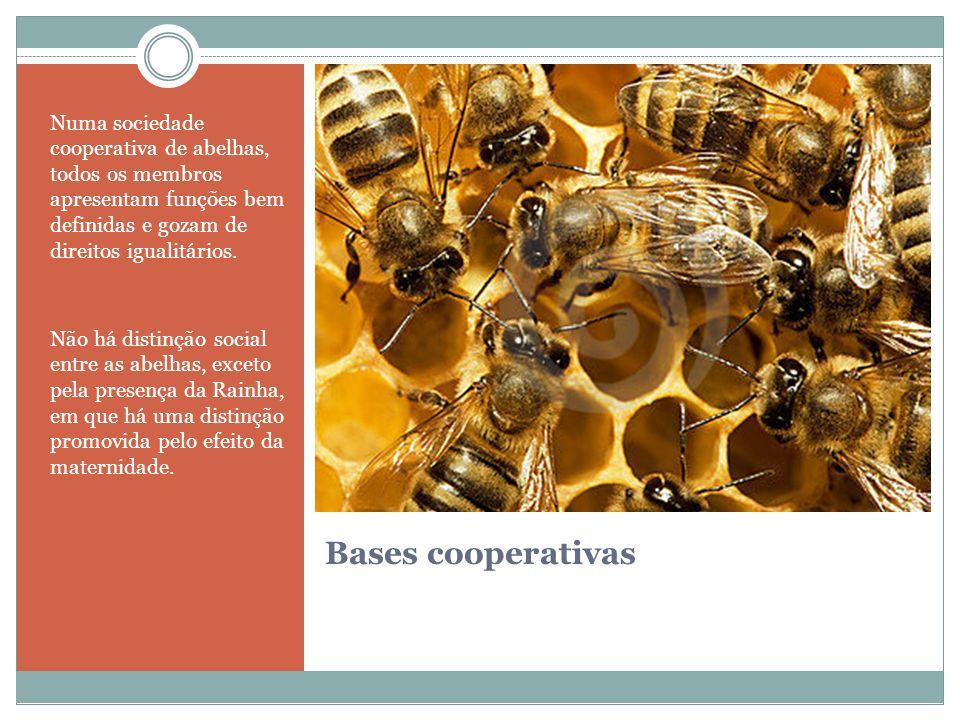 Numa sociedade cooperativa de abelhas, todos os membros apresentam funções bem definidas e gozam de direitos igualitários.