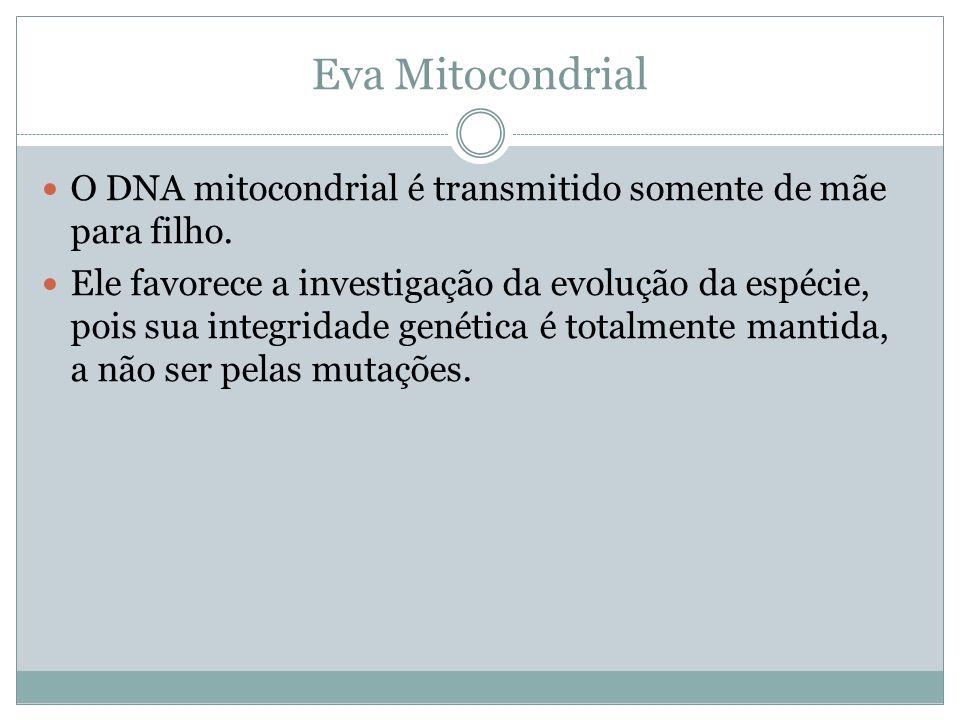 Eva Mitocondrial O DNA mitocondrial é transmitido somente de mãe para filho.