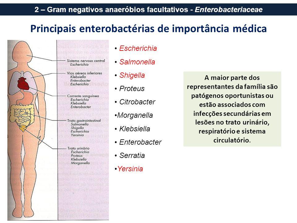 Principais enterobactérias de importância médica