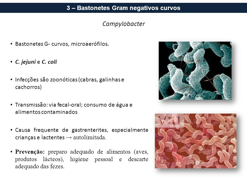 ICB/UFJF - Microbiologia Aplicada à Odontologia - 2012