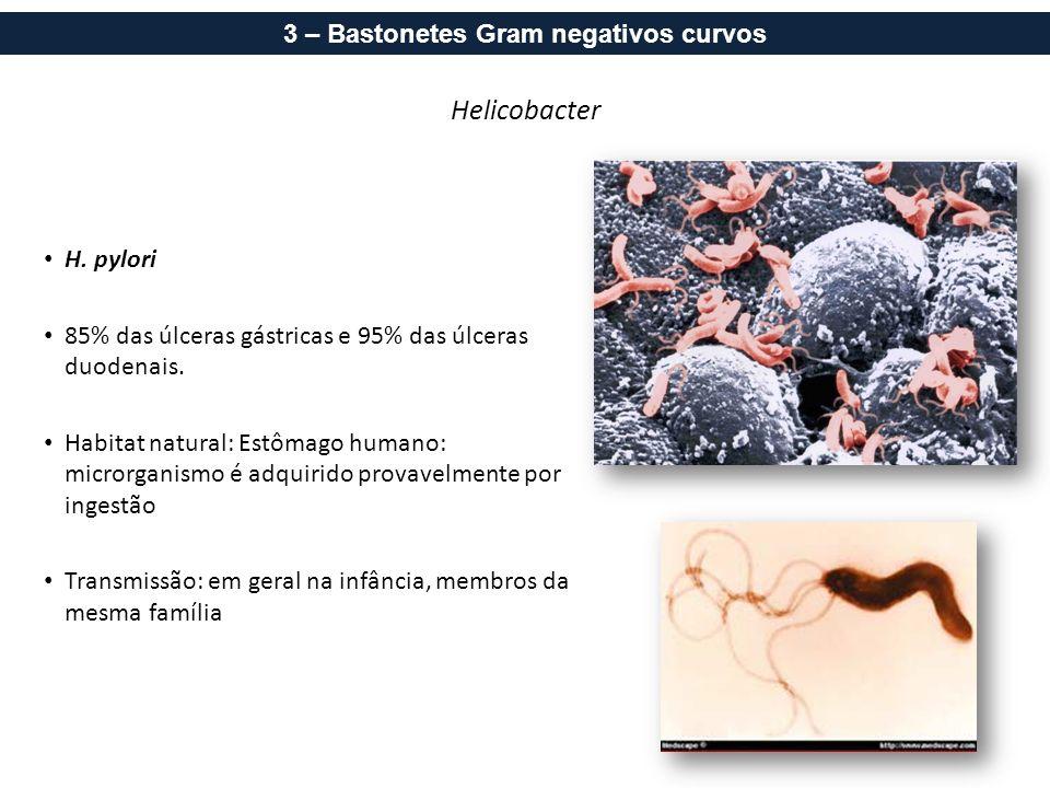 3 – Bastonetes Gram negativos curvos