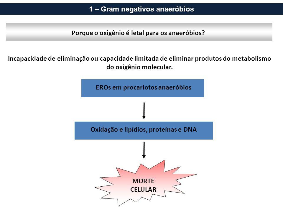 1 – Gram negativos anaeróbios