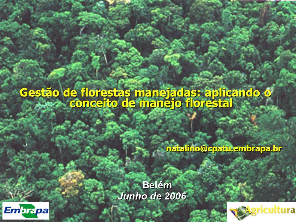 Gestão de florestas manejadas: aplicando o conceito de manejo florestal