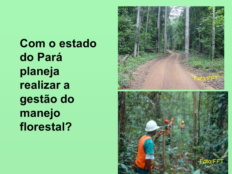 Com o estado do Pará planeja realizar a gestão do manejo florestal