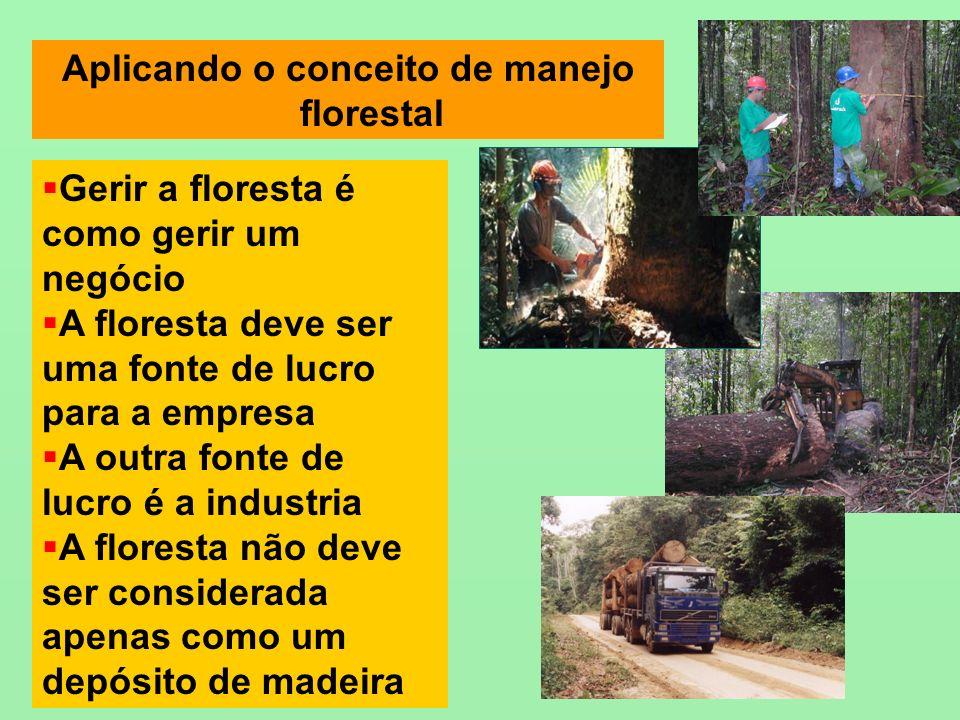 Aplicando o conceito de manejo florestal