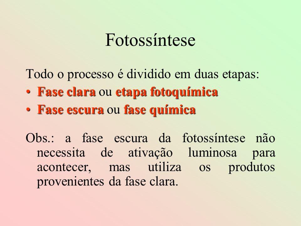 Fotossíntese Todo o processo é dividido em duas etapas: