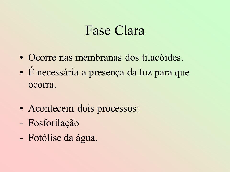 Fase Clara Ocorre nas membranas dos tilacóides.