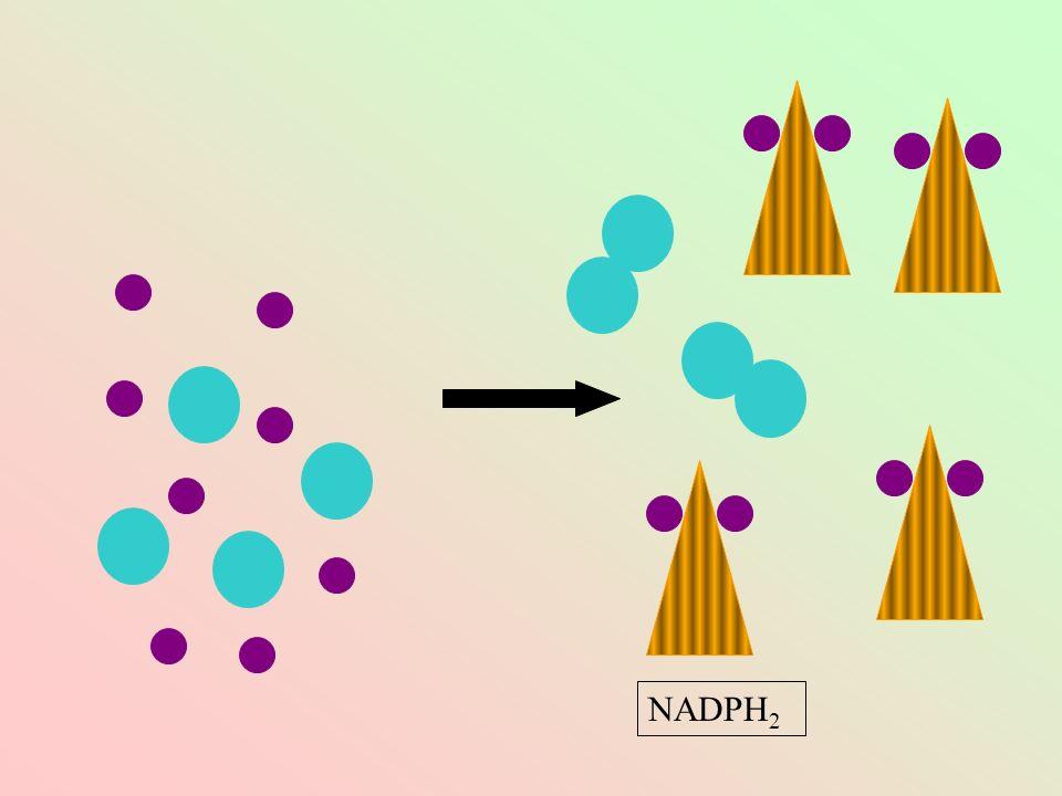 NADPH2
