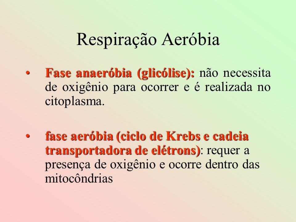 Respiração AeróbiaFase anaeróbia (glicólise): não necessita de oxigênio para ocorrer e é realizada no citoplasma.