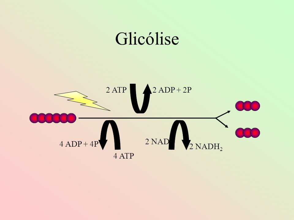 Glicólise 2 ATP 2 ADP + 2P 2 NAD 4 ADP + 4P 2 NADH2 4 ATP