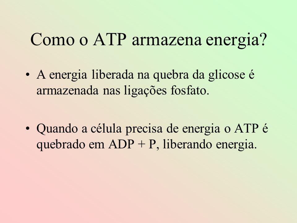 Como o ATP armazena energia