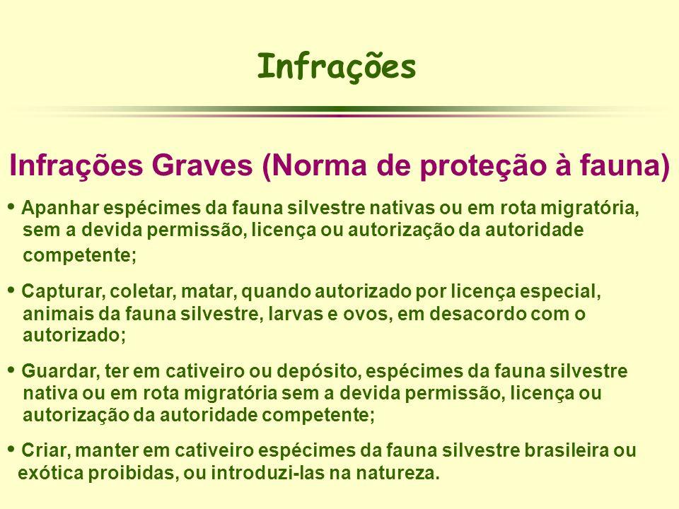 Infrações Graves (Norma de proteção à fauna)