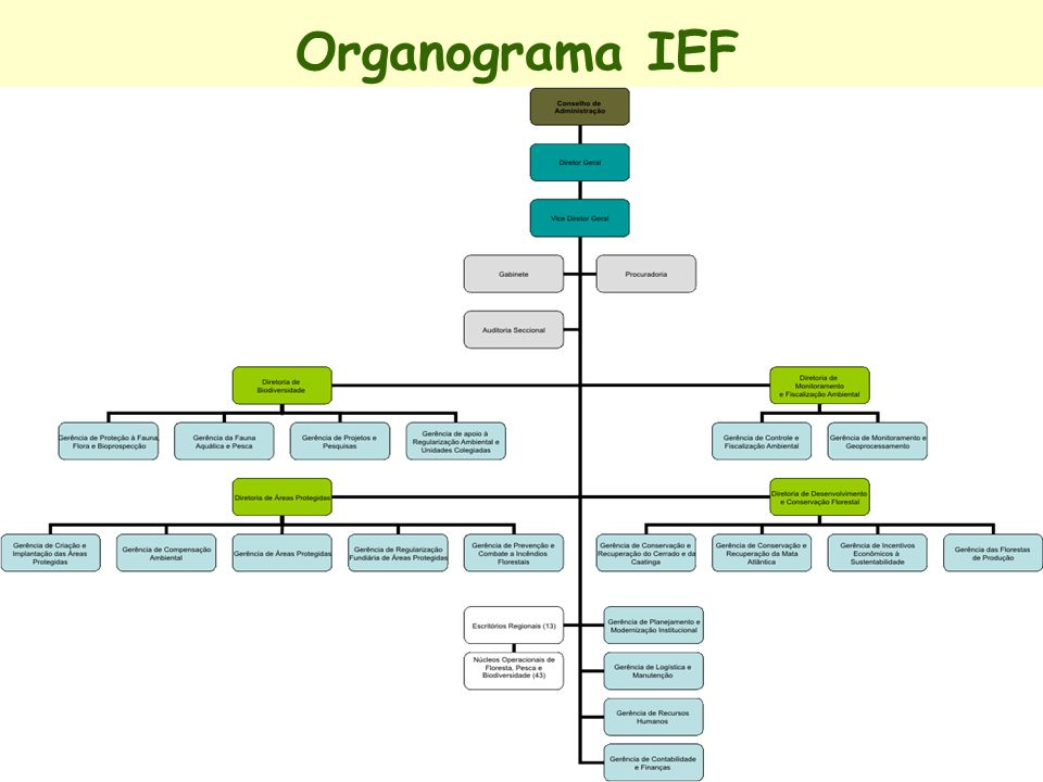 Organograma IEF