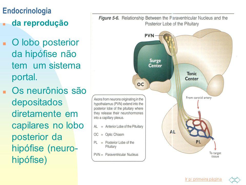 O lobo posterior da hipófise não tem um sistema portal.