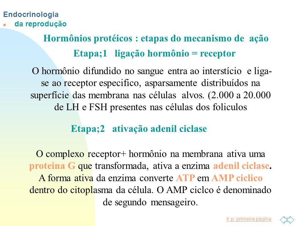 Hormônios protéicos : etapas do mecanismo de ação