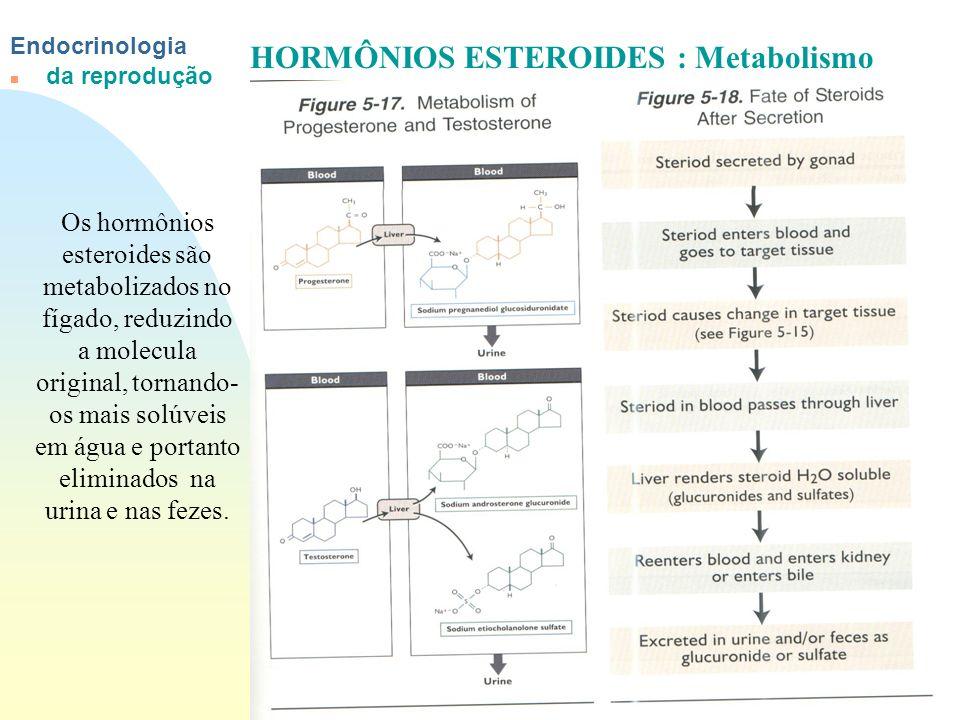 HORMÔNIOS ESTEROIDES : Metabolismo
