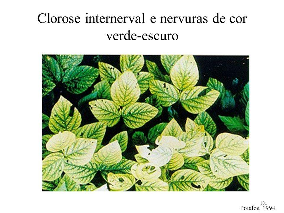 Clorose internerval e nervuras de cor verde-escuro