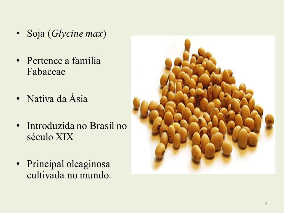 Soja (Glycine max)Pertence a família Fabaceae. Nativa da Ásia. Introduzida no Brasil no século XIX.