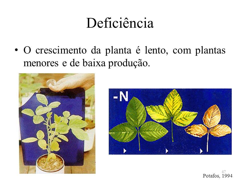 Deficiência O crescimento da planta é lento, com plantas menores e de baixa produção. Potafos, 1994