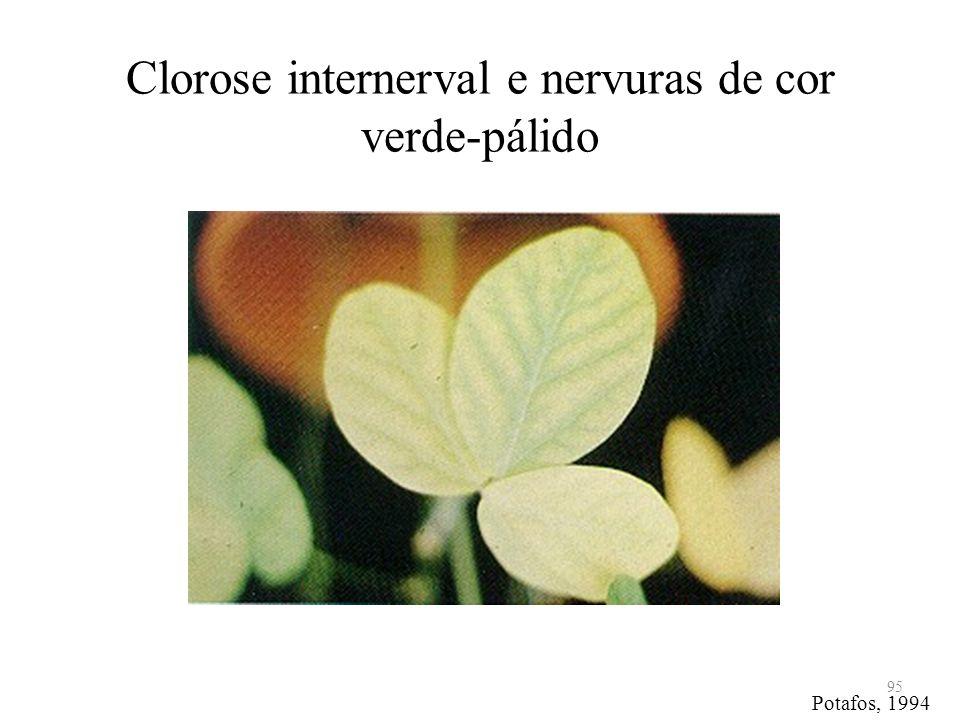 Clorose internerval e nervuras de cor verde-pálido
