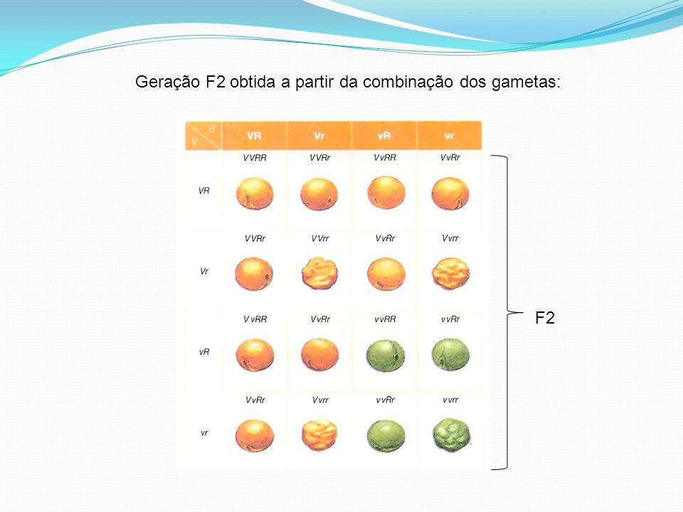Geração F2 obtida a partir da combinação dos gametas: