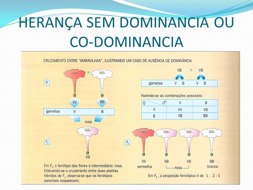 HERANÇA SEM DOMINANCIA OU CO-DOMINANCIA