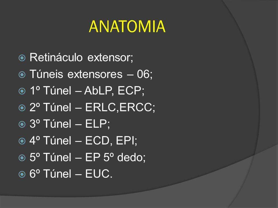 ANATOMIA Retináculo extensor; Túneis extensores – 06;