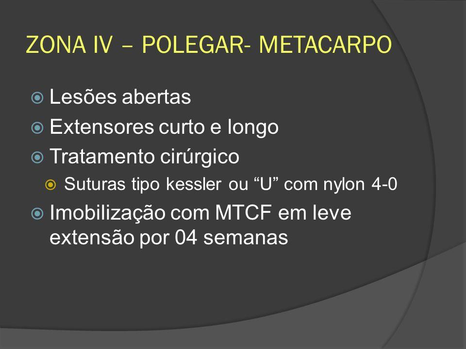 ZONA IV – POLEGAR- METACARPO