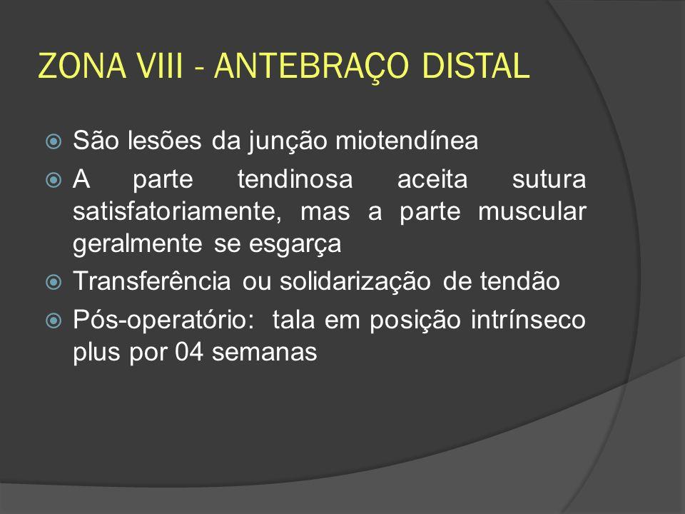 ZONA VIII - ANTEBRAÇO DISTAL