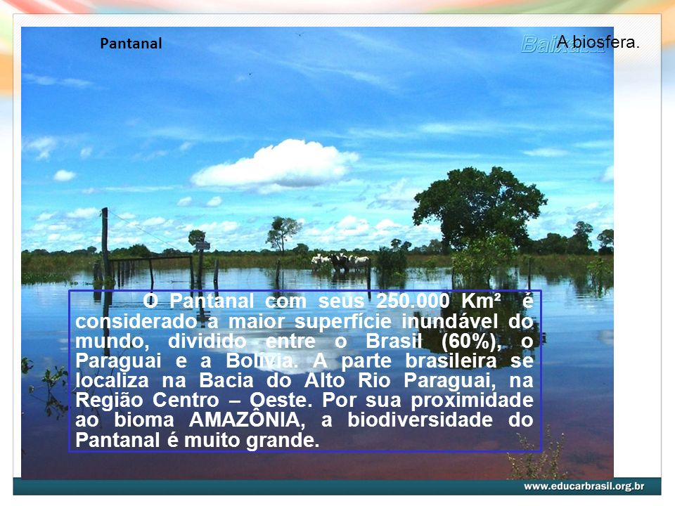 Pantanal A biosfera.