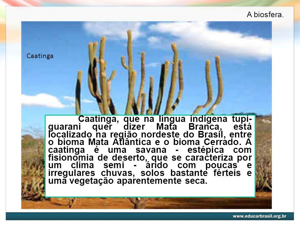 A biosfera.Caatinga.