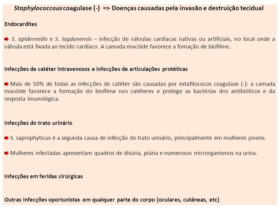 Staphylococcous coagulase (-) => Doenças causadas pela invasão e destruição tecidual