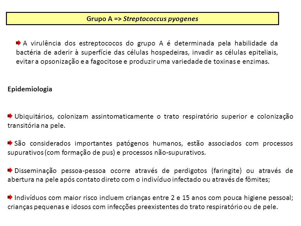 Grupo A => Streptococcus pyogenes