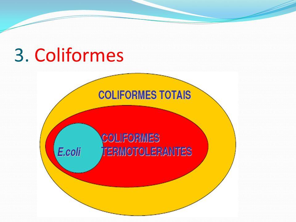 3. Coliformes