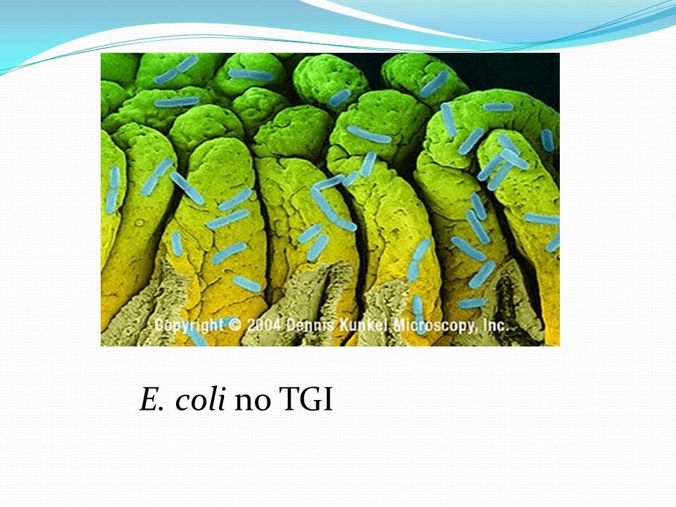 E. coli no TGI