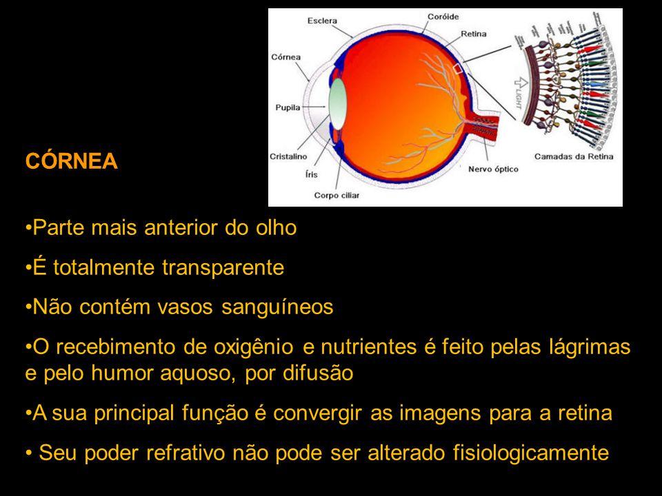 CÓRNEA Parte mais anterior do olho. É totalmente transparente. Não contém vasos sanguíneos.