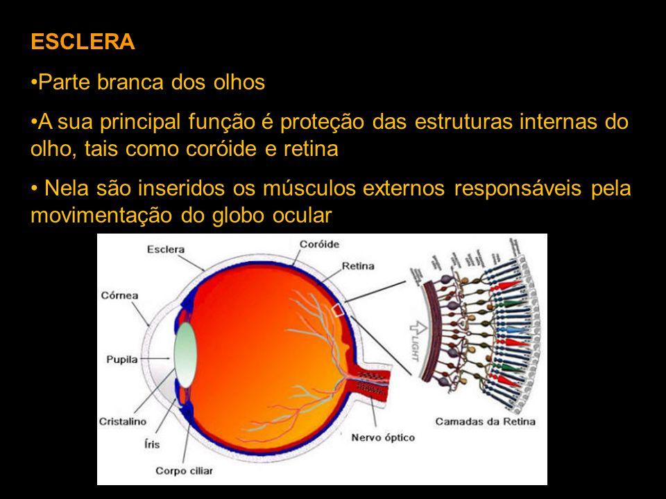 ESCLERA Parte branca dos olhos. A sua principal função é proteção das estruturas internas do olho, tais como coróide e retina.