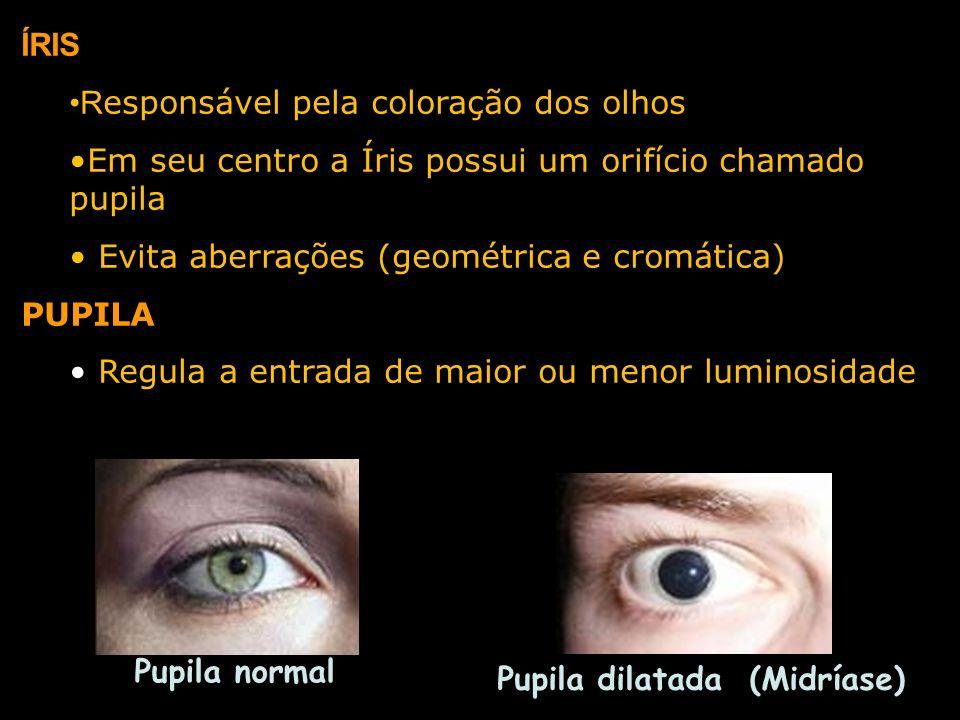 ÍRIS Responsável pela coloração dos olhos. Em seu centro a Íris possui um orifício chamado pupila.