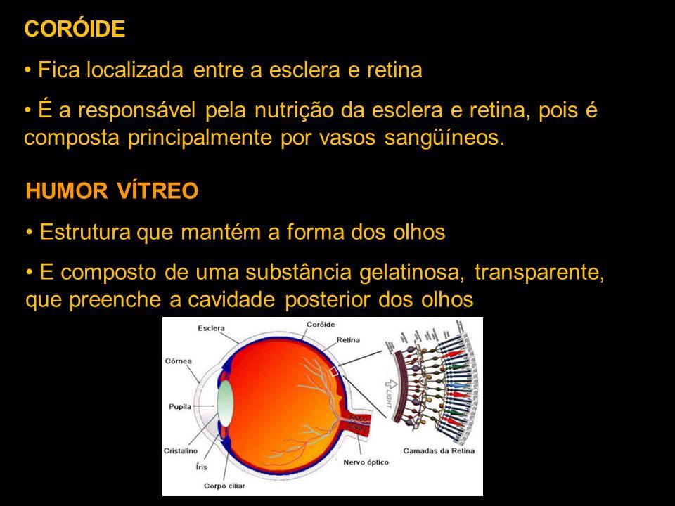 CORÓIDE Fica localizada entre a esclera e retina.