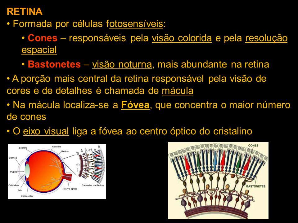 RETINA Formada por células fotosensíveis: Cones – responsáveis pela visão colorida e pela resolução espacial.